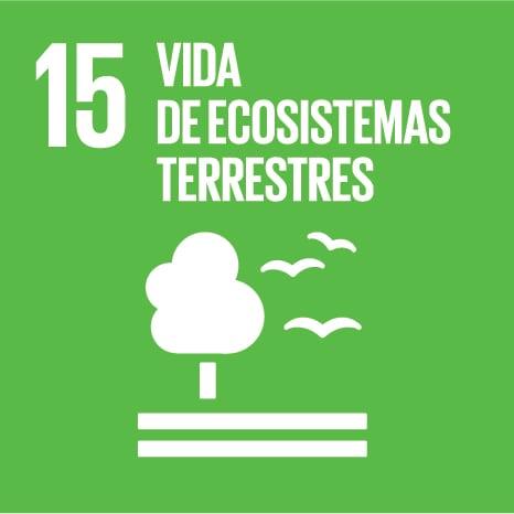 15:ecosistemas terretres